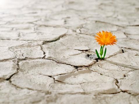 Las crisis, ¿Una oportunidad para crecer? (1/2)