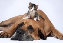 perro-gato1